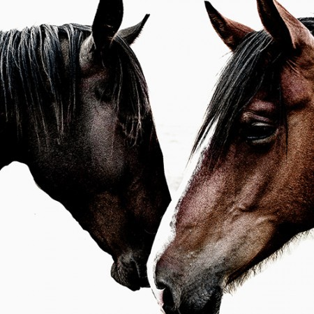 Limited Edition Photographic Print - Wild Horses