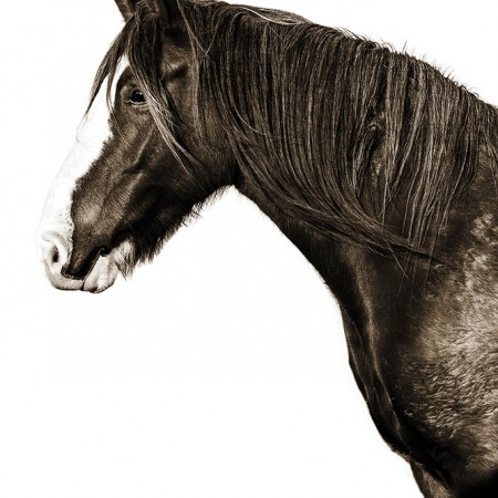 BUSH BRUMBY PHOTOGRAPHIC PRINT